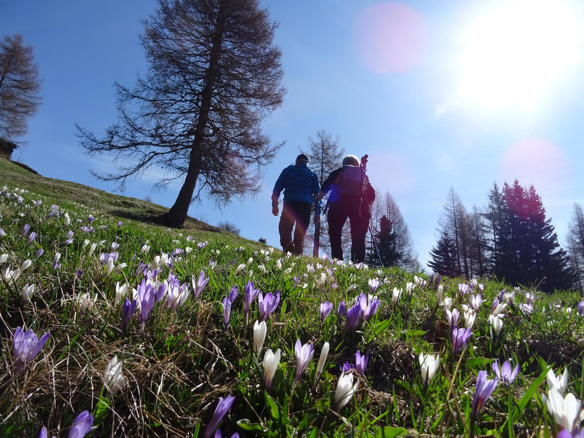 Offerta vacanza Risveglio della primavera